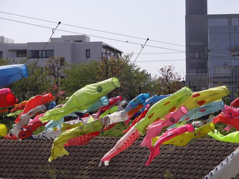 大正川の鯉のぼり2